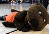Oregon State Basketball: 2018-19 season preview for the Beavers