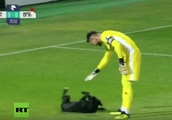 Ruff play: Top tier football match interrupted by dog hunting for belly rubs
