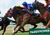 Horse racing betting tips: Paddy Power expert reveals why you should back this 9/1 shot at Haydock