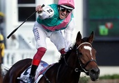 Enable the star of show with historic victory at Breeders' Cup