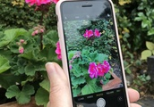 Plant identification and advice at your fingertips: 4 of the best free gardening apps