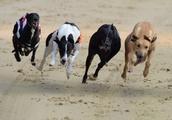 Florida's Amendment 13 Ending Greyhound Dog Racing Passes