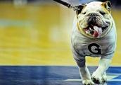 GAME THREAD: Georgetown Hoyas vs South Florida Bulls