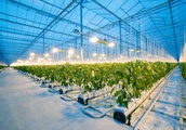 Why Microsoft, Tencent, and Intel are growing cucumbers in autonomous greenhouses
