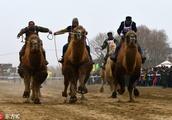 Camel racing fair held in Xinjiang