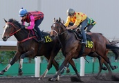 From Cox Plate to Hong Kong Derby, the HK$13 million European import with high expectations