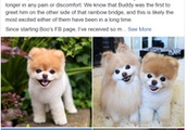 Boo, the Internet's favorite Pomeranian, dies of 'broken heart', owner says