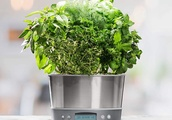 Amazon slashes prices in half for AeroGardens smart indoor garden, today only