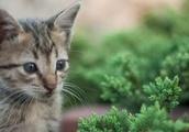 Viral cat video 'Dear Kitten' finds new life in TikTok challenge