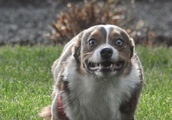 10 Pets Who Definitely Weren't Ready to Have Their Picture Taken