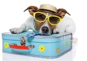 Pet owners urged to leave cats and dogs in good hands before going on holidays