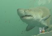 Popular Pittsburgh Vacation Spot: 2 Shark Attacks In 2 Weeks
