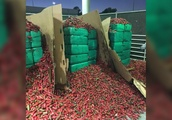 Nearly 4 tons of weed was discovered inside a shipment of jalapeños