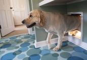 New Alexa smart speaker skill plays music for your dog