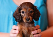 Petting cats and dogs for 10 minutes can 'significantly reduce stress'