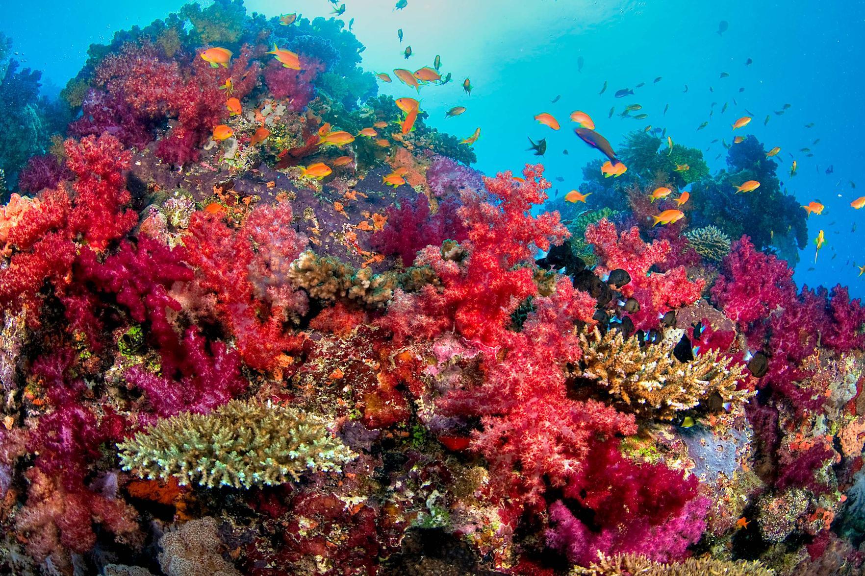 Top Sea Corals Who Enchant You. Reef Diving Holidays._国际_蛋蛋赞