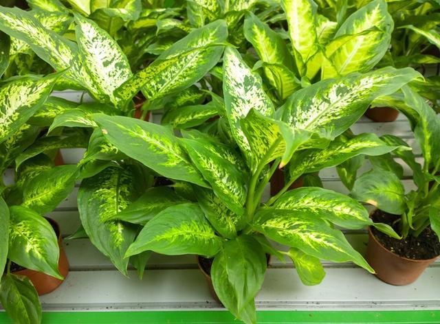 Esta planta nunca deve ser tocada por ninguém!