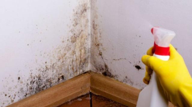 La Moisissure Peut être Dangereuse Si Elle Ne Se Développe Pas. Voici  Quelques Façons Naturelles De Vous Débarrasser De Ce Champignon Dans Votre  Maison.