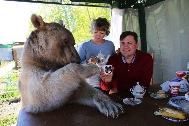 Картинки по запросу русская семья с медведем