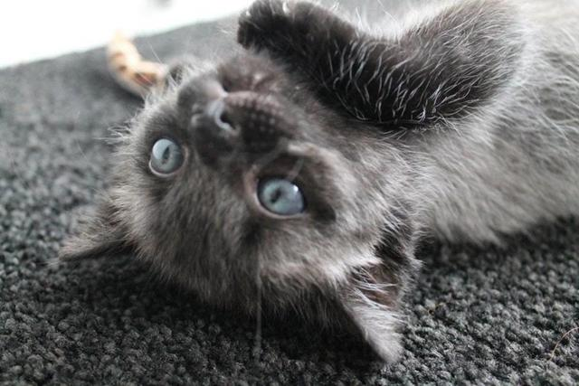 After Finding A Sick Kitten, This Woman Was Stunned When It Began To Change Color.