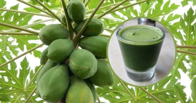 HOW TO DRINK PAPAYA LEAF JUICE TO DETOXIFY LIVER, REVERSE FATTY LIVER AND STOP LIVER CANCER