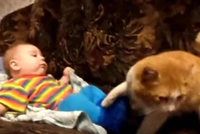 Cat Who Decides It's His Little Human's Nap Time Won't Take 'No' For An Answer