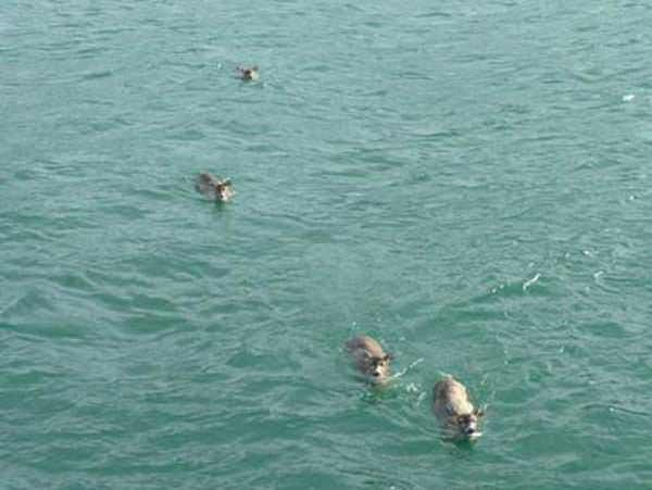 Family Were Boating In Alaska When They Spotted Something. When They Came Closer? OMG.