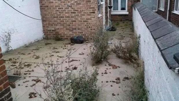 A vizinha sempre jogava fezes em seu quintal, de saco cheio ele resolve tomar uma atitude surpreendente