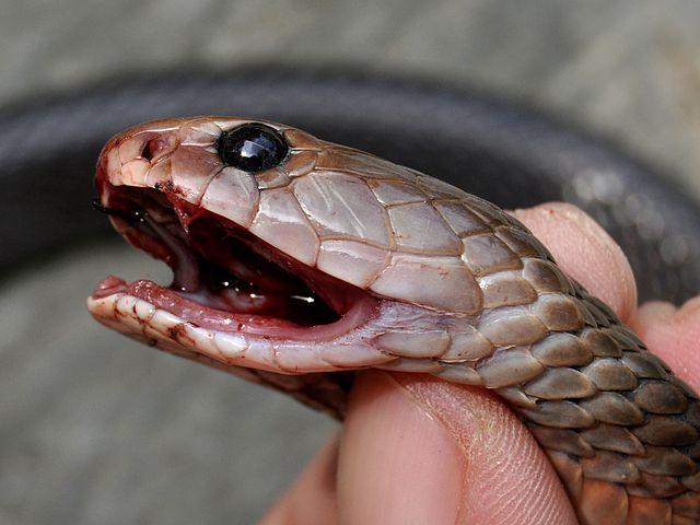 6 Criaturas que ficam vivas depois de serem mortas