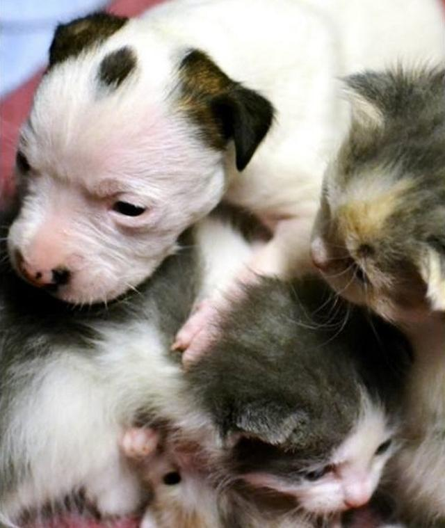 After This Puppy Was Abandoned At Birth, An Unlikely Animal Stepped In To Mother Him