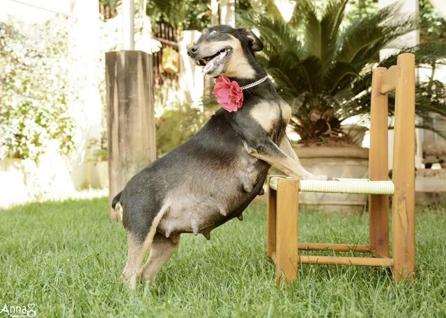Pregnant Dog WORKS IT In Her Very Own Maternity Photo Shoot