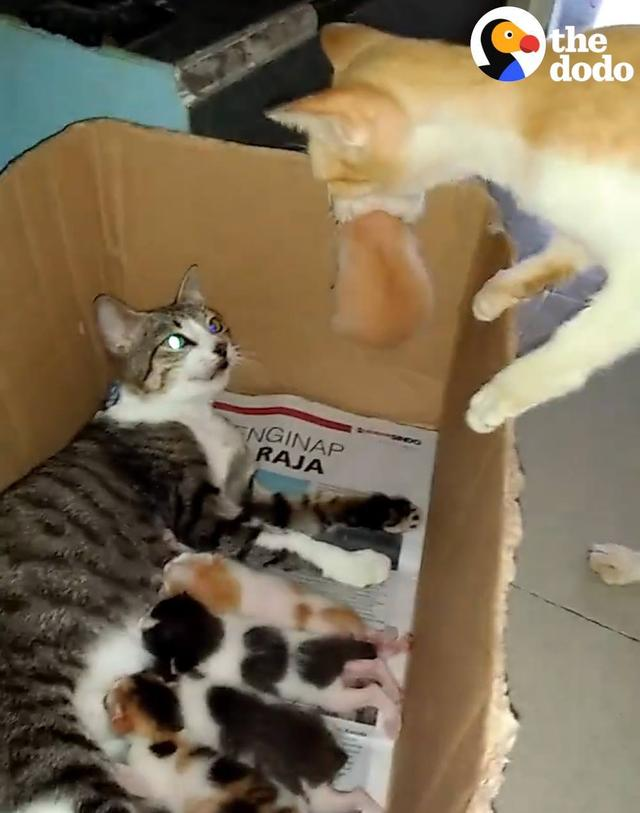 Cat Dad Is so Proud of His Kittens