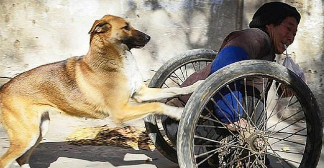 Loyal Dog Pushes His Disabled Human To Work Everyday In His Wheelchair