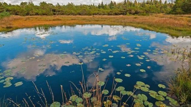O mistério dos corpos de mais de 2 mil anos achados em pântanos da Dinamarca