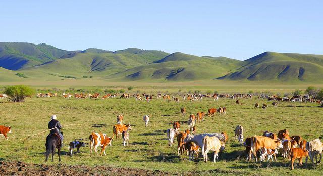 内モンゴル自治区の牧畜民、夏の移動を開始 - Beezまとめ