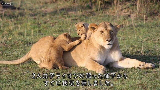 3 育て を 後 て の ライオン が 赤ちゃん 犬 年