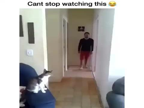 watch how a man and cat who live together greet each other it's funny!!