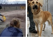 Loyal Dog Is Abandoned On Dirt Road, Then Rescuer Exposes The 'Heartless Scumbag' On Facebook