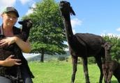 Nevalea Alpaca farm welcomes rare twins