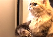 【かわいい子猫】大盛況!子猫たちの滑り台wwCute kittens enjoy