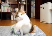全部空振りする猫www [No.558]