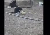 猫とアヒルの友情に感極まる!