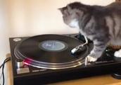 レコードに夢中!自らレコードになろうとする猫が面白すぎる!