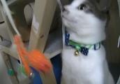 キャットタワーの猫に構って欲しかった飼主