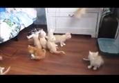 驚く子猫達がかわいすぎるwww