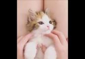 ふにふにナデナデされる子猫がかわいすぎるwww