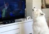 テレビの犬に、一生懸命に遠吠えするワンちゃんが健気な件について・・
