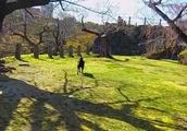 春のお城をお散歩