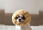 【犬動画】色んなパンになってみましたけどwwこんなのもあり?