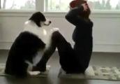 こんな犬がいてくれたら筋トレも楽しいよね!